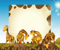 Border Template With Many Giraffes In The Field Stock Photos - 82991883
