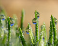 Green Grass Blades With Rain Drops That Reflect Saguaro Cactus Stock Images - 83022644