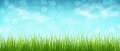 Grass And Blue Sky With Clouds, Bokeh. Spring Background. Panora Royalty Free Stock Images - 83085499