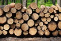 Wood Trunks In Forest Royalty Free Stock Photos - 83129198