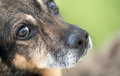 Dog`s Nose And Eye Royalty Free Stock Photo - 83178265