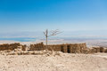 Lonely Dry Tree In Masada National Pakk Stock Images - 83226994