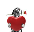 Dog Holding Heart And Rose Stock Photography - 83265412