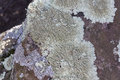 Lichen Royalty Free Stock Photography - 83292087