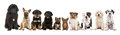 Large Group Of Ten Different Kind Of Breed Puppies Stock Image - 83332151