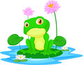 Green Frog Sitting On A Leaf Stock Images - 83365134