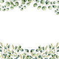 Watercolor Floral Frame Card With Silver Dollar And Seeded Eucalyptus Leaves. Hand Painted Border With Branches And Royalty Free Stock Photo - 83504515