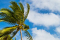 Palm Tree In The Wind Royalty Free Stock Images - 83518029