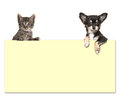 Cute Chihuahua Dog And A Tabby Baby Cat Holding An Yellow Paper Stock Photography - 83548892