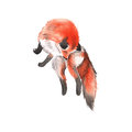 Red Fox. Isolated On A White Background. Watercolor Illustration. Stock Images - 83595994