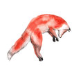 Red Fox. Isolated On A White Background. Watercolor Illustration. Royalty Free Stock Photography - 83595997
