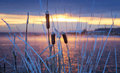 Winter Morning Landscape On The River With The Mist And The Reeds Russia, The Urals Royalty Free Stock Photo - 83640815