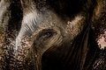 Elephant Face With Grunge Skin Texture. Stock Image - 83660351