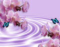Orchids And Butterflies Fantasy Stock Photography - 8378812
