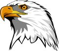 Eagle Head Royalty Free Stock Photo - 83778605