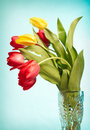 Red And Yellow Tulips Royalty Free Stock Photography - 8382427