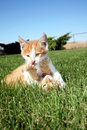 Kittens Royalty Free Stock Photography - 8388577