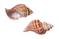 Shells Of Molluscs, Blank Rough Thrown Surf Royalty Free Stock Images - 83806319