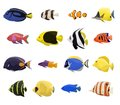 Coral Reef Fish Set Stock Image - 83807501