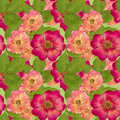 Briar, Wild Rose,. Seamless Pattern Texture Of Pressed Dry Flowe Stock Image - 83822291