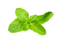 Mint Leaf Royalty Free Stock Images - 83935389