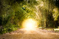 Road Through Bamboo Forest And Light End The End Of Tunnel Stock Images - 83938184