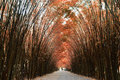 Tunnel Bamboo Trees And Walkway Royalty Free Stock Image - 83953456