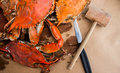 Steamed Crabs With Spices. Maryland Blue Crabs. Stock Image - 83970081