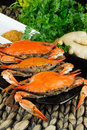 Hot Steamed Blue Crabs With Ginger. Maryland Crabs. Cooked And Ready To Eat. Stock Photos - 83973023
