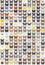 200 Different Butterflies Royalty Free Stock Images - 8403989