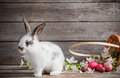 Rabbit With Easter Eggs Royalty Free Stock Image - 84100596