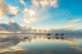 Horses Walking On The Beach At Sunset Stock Images - 84109974