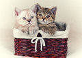 Two Small Kittens Royalty Free Stock Images - 84182089