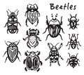 Set Of Hand Drawn Ink Bugs, Beetles Royalty Free Stock Photos - 84195308