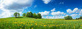 Field With Dandelions And Blue Sky Royalty Free Stock Image - 84229616