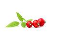 Rosehip Isolated. Royalty Free Stock Images - 84280169