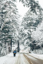 Fir Tree Road Of Snowy Winter Royalty Free Stock Photography - 84356257