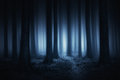 Dark And Scary Forest At Night Royalty Free Stock Photos - 84362348