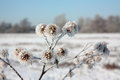 Frost On Plants Royalty Free Stock Photography - 84381027