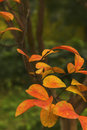 Red Autumn Leaves Stock Image - 84414101