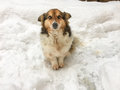 Dog In The Snow Stock Photography - 84451992