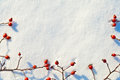 Winter Snow Background Decorated With Rose Hip Berries Royalty Free Stock Photos - 84479128