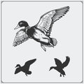 Set Of Flying Wild Ducks. Royalty Free Stock Photo - 84566785