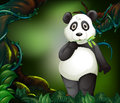 Panda Standing In Deep Forest Stock Photography - 84571582