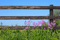 Fence And Wild Flowers Royalty Free Stock Photos - 8463748