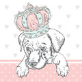 Cute Puppy Wearing A Crown. Vector Illustration For Greeting Card, Poster, Or Print On Clothes. Dog Clothing. Royalty Free Stock Photos - 84610278