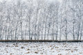 Birch Trees Covered With Snow Royalty Free Stock Photo - 84676245