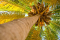 Palm Tree Royalty Free Stock Images - 8477639