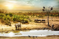 South African Safari Wildlife Fantasy Scene Royalty Free Stock Image - 84706166
