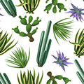 Seamless Pattern With Cactuses And Succulents Set. Plants Of Desert Stock Photos - 84735323